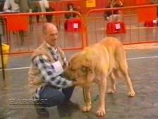 Sopuerta 1998. Canino - 002