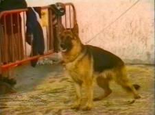 Sopuerta 1998. Canino - 004