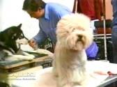 Sopuerta 1998. Canino - 009